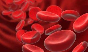 Состав и функции крови