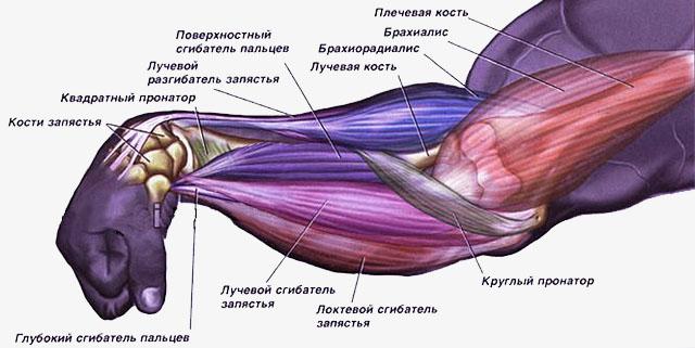 Растяжка мышц руки, запястья