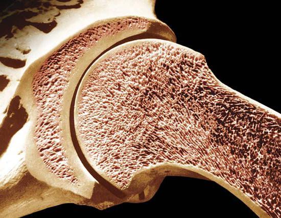 Загадка прочности костей