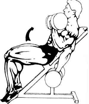 Подъем гантелей на скамье