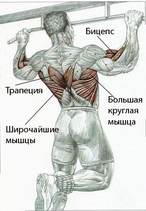 Работа мышц при подтягивании