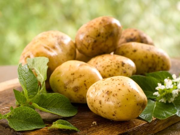 Описание картофеля